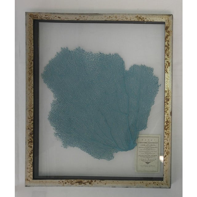 Blue Haze Sea Fan in Antiqued Silver Frame, clear see through background, preproduction designed to look old with copy of...