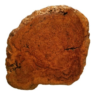 1960s Burl Chunk For Sale