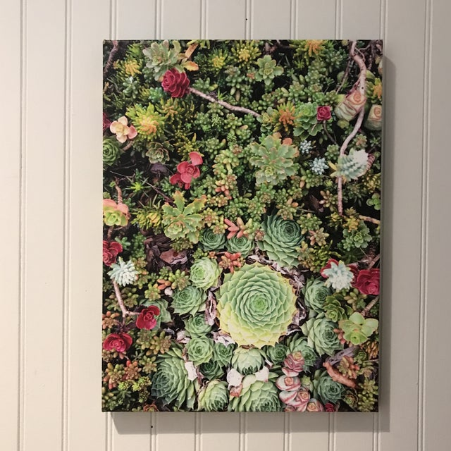 """""""Succulents"""" Photograph on Canvas For Sale - Image 10 of 10"""
