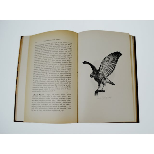 1896 The Birds of New Jersey Book - Image 11 of 11