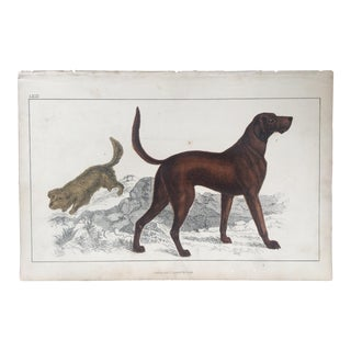 19th C. Goldsmith Dog Engraving