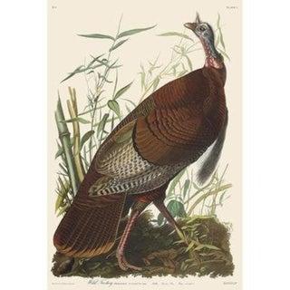 Audubon Havell Edition Wild Turkey Print For Sale