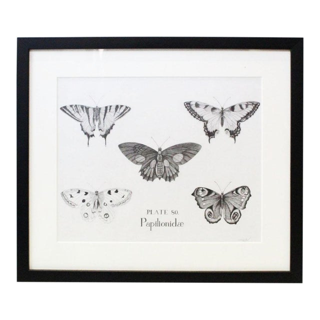 Black and White Butterflies Sketch For Sale