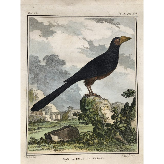 18th Century French Bird Engraving Signed by Jacques De Sève Featuring an Anis For Sale - Image 11 of 13