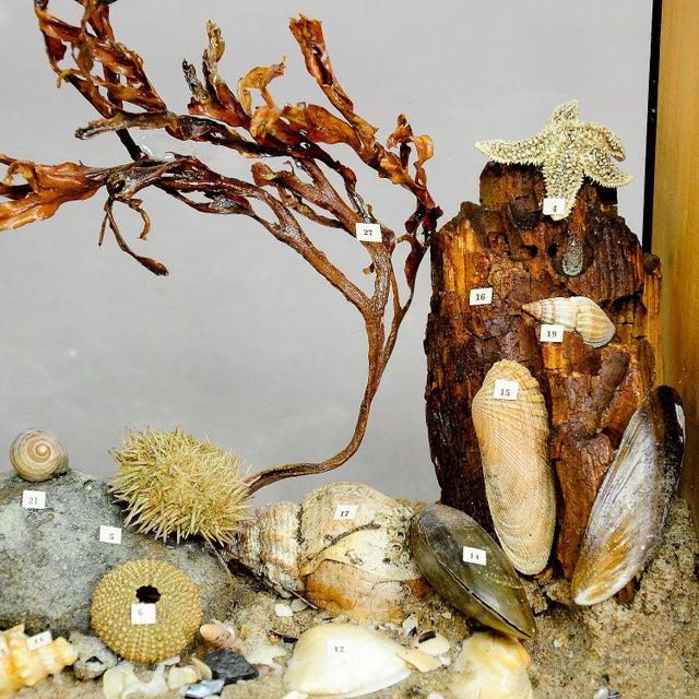 Antique Natural Wunderkammer Aquarium Specimen For Sale - Image 4 of 7