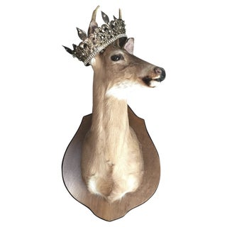 Large Mounted Deer Head Stag For Sale
