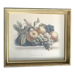Antique French Still Life Fruit Etching Print by Grobon Freres For Sale