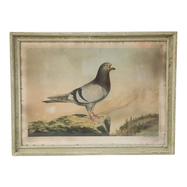 Belgian Colored Framed Pigeon Engraving For Sale