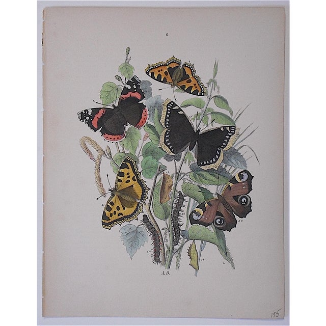 Antique Chromolithograph Butterflies/Moths - Image 2 of 3