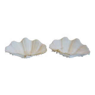 Nautical Clamshell Specimens - Set of Two For Sale