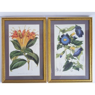 Antique Framed French Botanical Prints- a Pair Preview