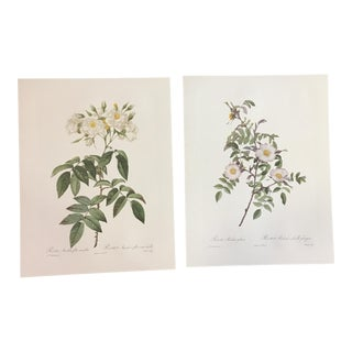 Pair of Prints After Pierre-Joseph Redouté of White Roses For Sale