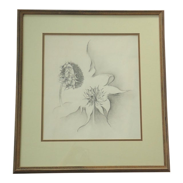 Julie Schaefer Sunflower Study Drawing For Sale
