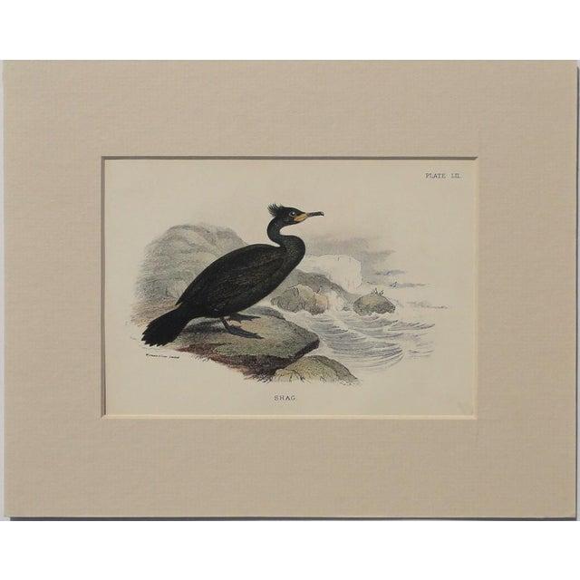 """1890 """"Shag"""" Original Chromolithograph - Image 4 of 5"""