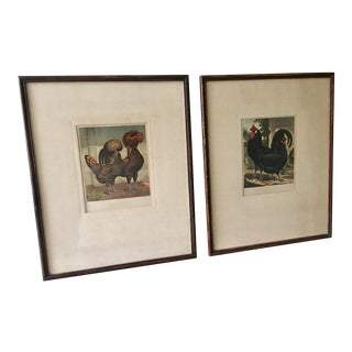 Framed 1890 Fowl Chromolithograph Prints - a Pair