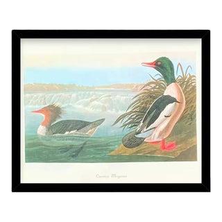 Custom Black Wood Frame of Authentic Vintage John James Audubon Common Merganser Duck & Botanical Print For Sale