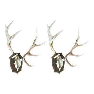 Pair of Mounted Stag Antlers