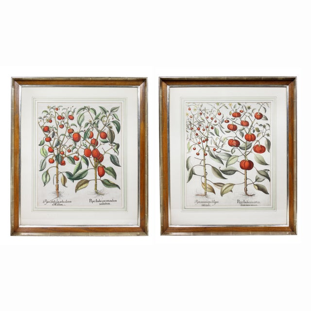 """""""Tomatoes"""" Botanical Engravings by Basilius Besler - a Pair For Sale In Boston - Image 6 of 6"""