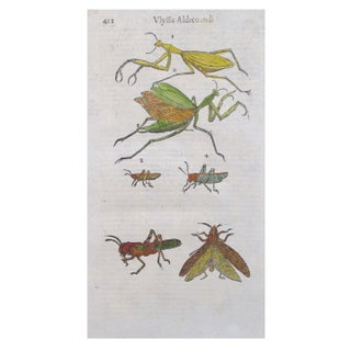 Engraved Sheet - Grasshoppers & Insects C. 1600