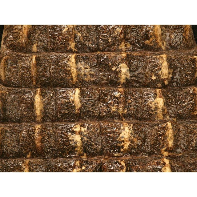 Brown Authentic Nile Crocodile Skin With Felt Backing For Sale - Image 8 of 11