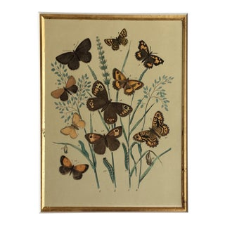 "1878 ""Butterflies"" Lithograph For Sale"
