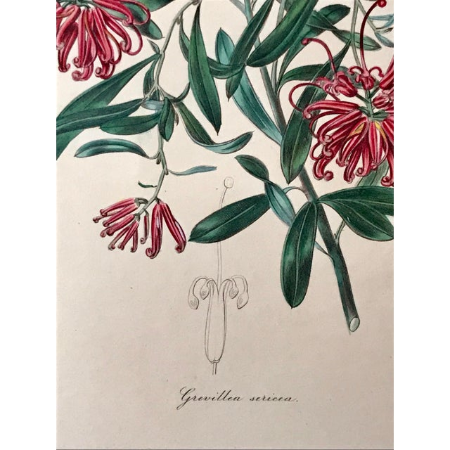 Antique Floral Botanical Colored Etching 19th Century For Sale In New York - Image 6 of 7