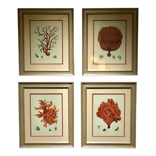 Coral Reef Prints Framed in Gold Frames - Set of 4 For Sale
