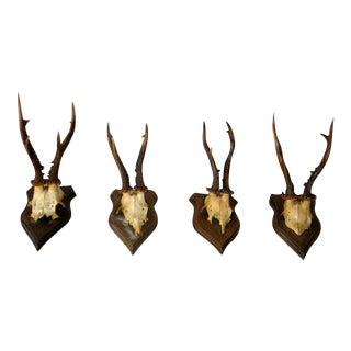 Collection of 20 Mounted Deer Antler / Horns