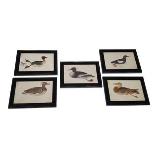 1940s Framed Duck Prints - Set of 5 For Sale