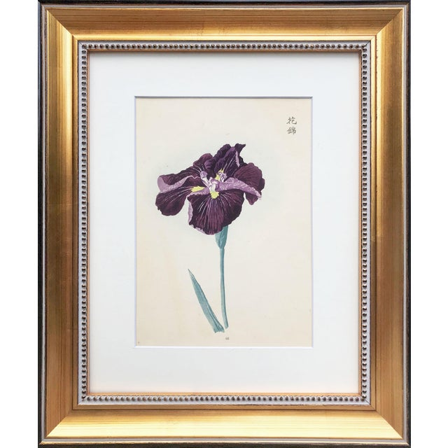 Embossed Japanese woodblock print from a nursery catalogue showing available types of iris. Circa 1900. Presented matted...