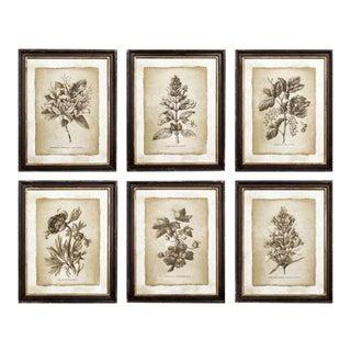 Kenneth Ludwig Chicago Framed Vintage Floral Prints - Set of 6 For Sale