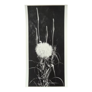 Modernist Plant Still Life Nature Photograph For Sale