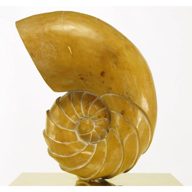 Gold Carved Wood Ammonite Shell Sculpture on Brass Pedestal For Sale - Image 8 of 9