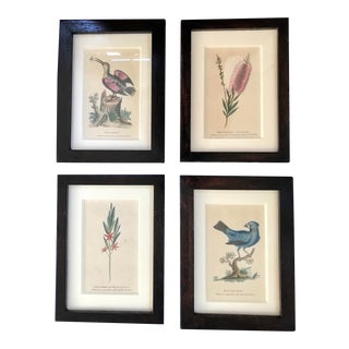 """Early 20th Century Antique Botanical Audubon Colored Etchings - 8.5"""" by 6.25"""", Set of 4 For Sale"""