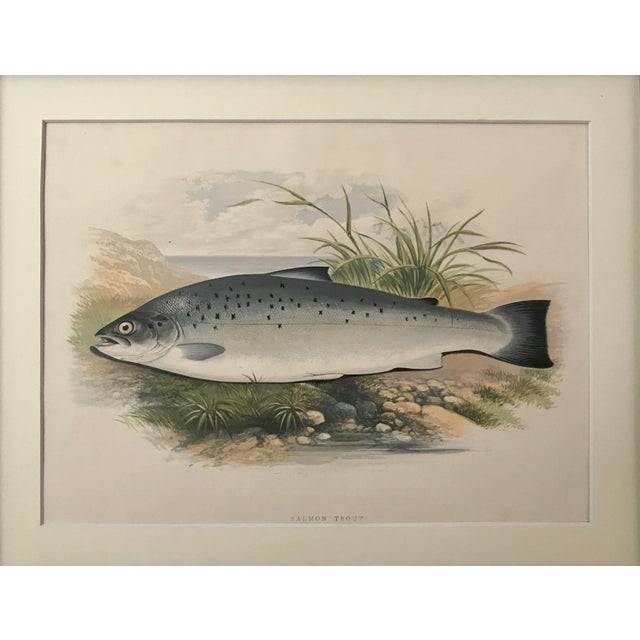 Antique Color Woodblock Print Salmon Trout Fish by Rev. William Houghton. Presented matted and framed. Hand-finished...