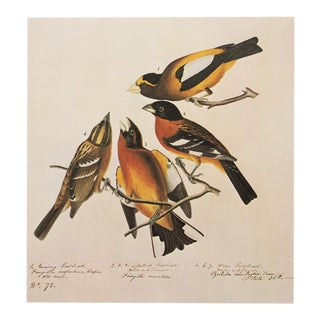 1960s Cottage Style Lithograph of Birds by Audubon
