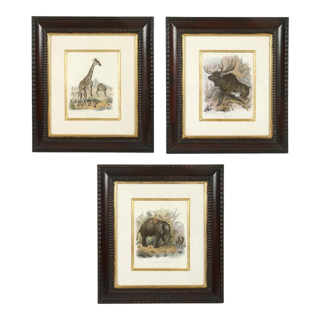 Set of Three Animal Prints in Mahogany Frames For Sale