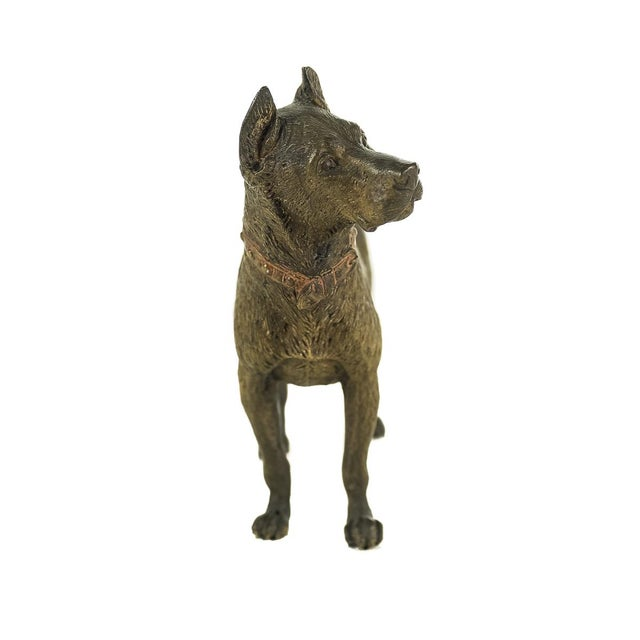 Brown Original Bronze Pit Bull Sculpture For Sale - Image 8 of 9