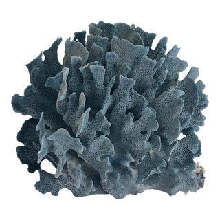 Natural Blue Coral Fragment For Sale