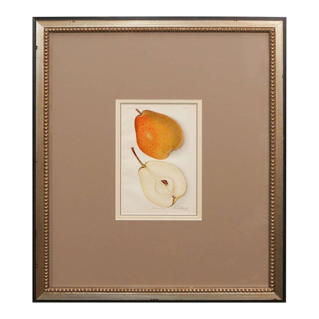 Architectural Digest Fruit Print For Sale