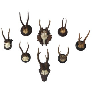 Set of Eight Antique Deer Trophies For Sale