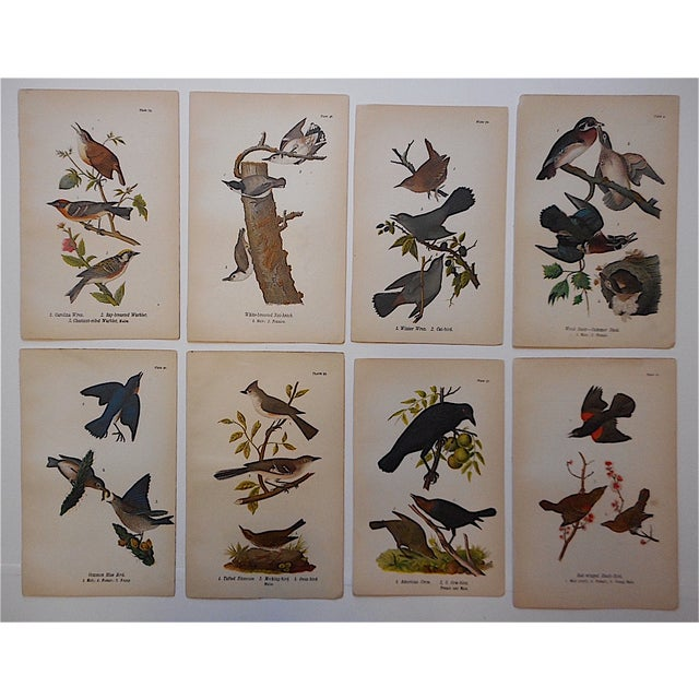 Country Antique American Bird Lithographs - Set of 8 For Sale - Image 3 of 3