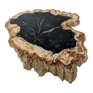 Authentic Fossil Petrified Wood Slab - Mid-Century Modern and Organic Modern For Sale