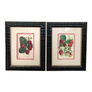 Strawberry Original Antique Prints - a Pair For Sale