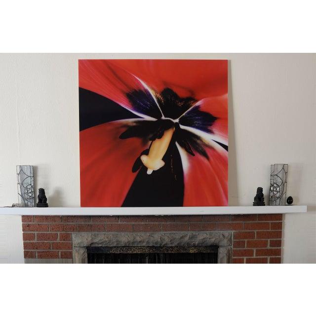 "Karen A Dombrowski-Sobel ""Inside Tulip"" Photograph - Image 5 of 5"