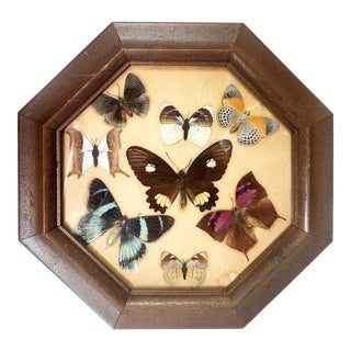 Mid-Century Mounted Butterfly Species Display With Frame For Sale