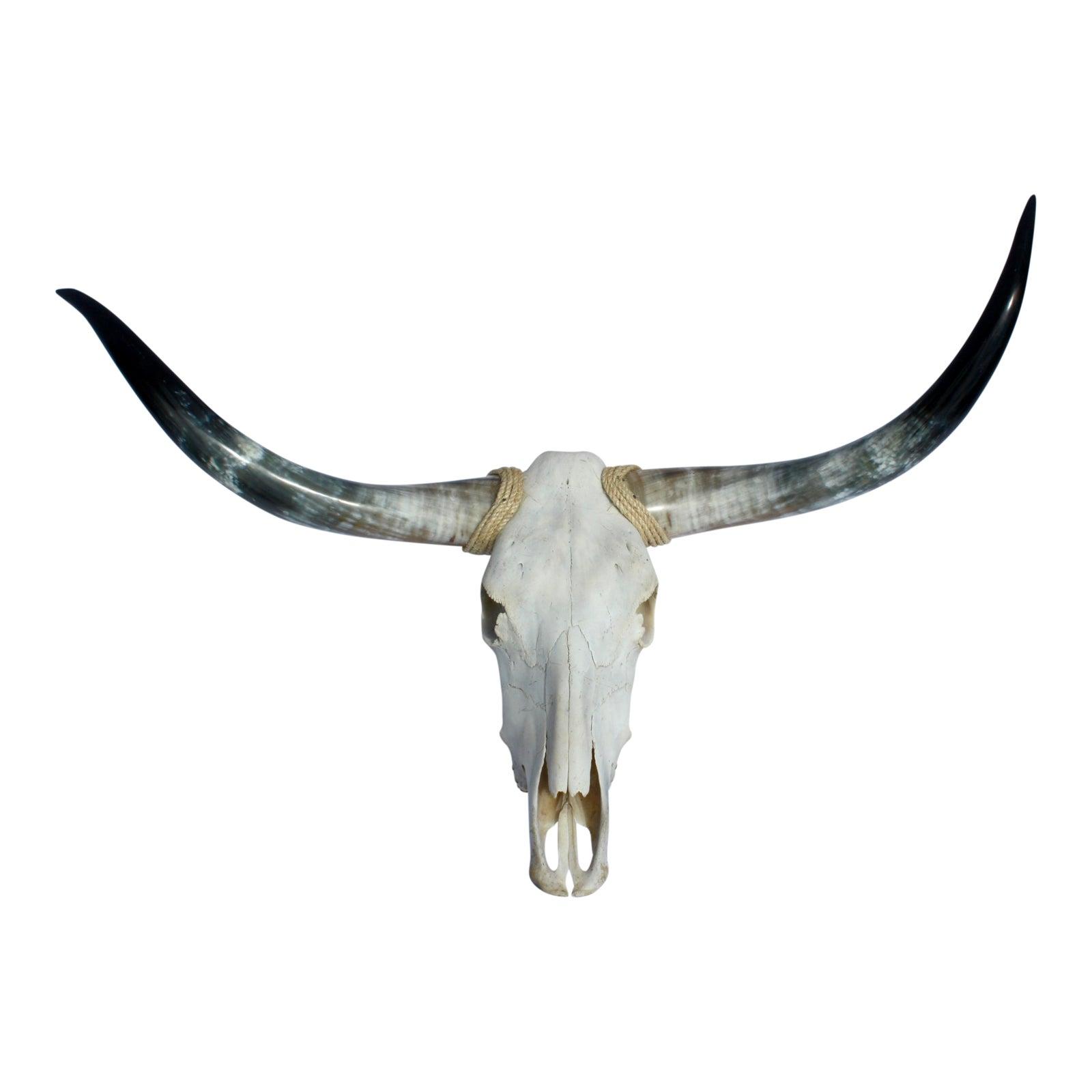 Texas Longhorns & Skull   Chairish