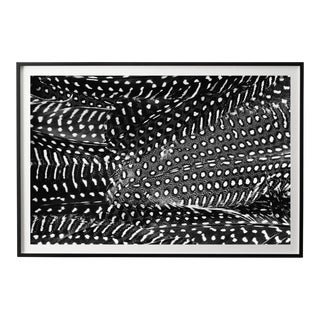 """Plumes No. 2"" Black and White Abstract Feather Photograph For Sale"