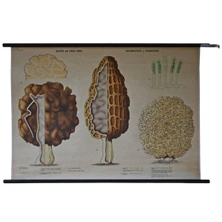 Swedish Schoolroom Poster of Fungus Forms (Aka Mushrooms) For Sale