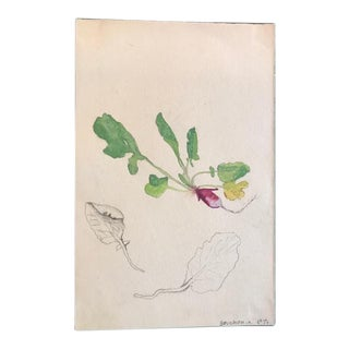 French Radish & Foliage Watercolor Design Study Painting